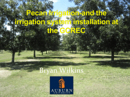 Pecan Irrigation-and the irrigation system installation at the GCREC