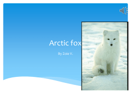 Arctic fox - Kids in Room 107
