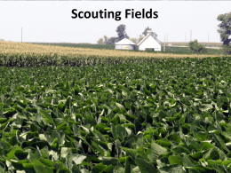 02 Basics of Scouting - Integrated Pest Management