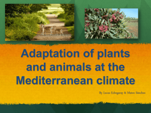 Adaptation of plants and animals at the Mediterranean