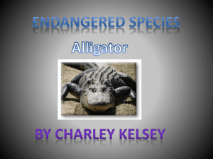 alligator powerpoint