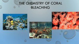 The Chemistry Behind Coral Reefs