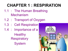 Structure of the Human Respiratory System