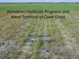Burndown Herbicide Programs and Weed Potential