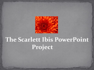 The Scarlet Ibis Powerpoint Project