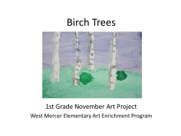 1- November Birch Trees Powerpoint
