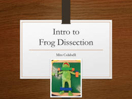 Frog Dissection Directional Terms