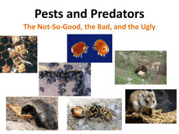 Pests and Predators by Ellen Miller