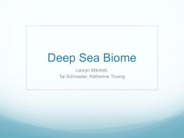 Deep Sea Biome