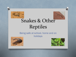 Snakes & Other Reptiles - Kororoit Creek Primary School