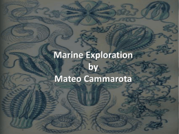 Marine Exploration by Mateo Cammarota Snorkeling is one of the