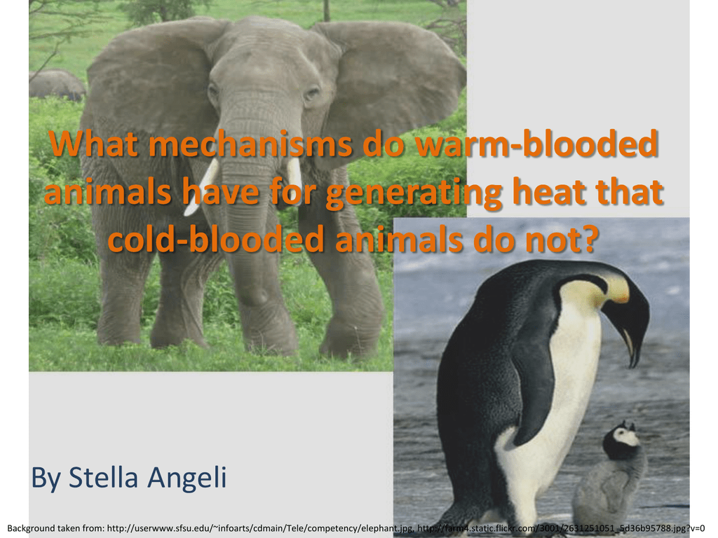 What mechanisms do warm-blooded animals have for