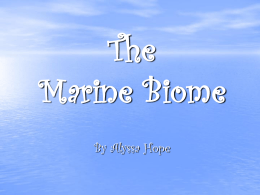 The Marine Biome - schuffertbiology