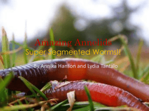 Amazing Annelids Super Segmented Worms
