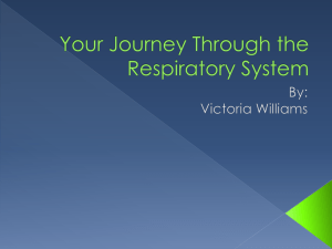 Your Journey Through the Respiratory System