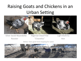 Raising Goats and Chickens in an Urban Setting