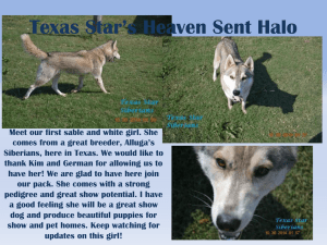 Texas Star*s Heaven Sent Halo