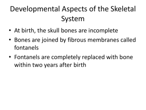Developmental Aspects of the Skeletal System