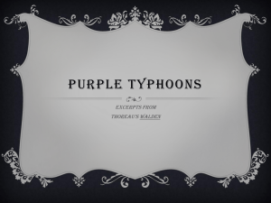 Purple typhoons
