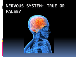 Nervous System True or False Intro