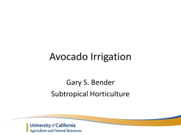 Avocado Irrigation