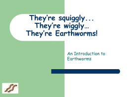 Earthworms - Newton.K12.ma.us
