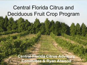 Central Florida Citrus and Deciduous Fruit Crop Program