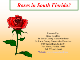 Roses in South Florida? - St. Lucie County Extension Office