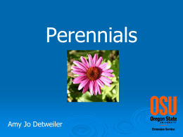 Perennials for the High Desert