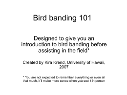 Bird Banding 101 Powerpoint