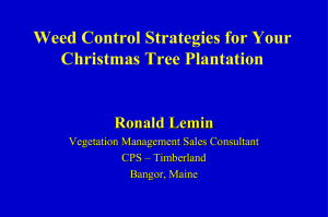 and Read Full Article - Maine Christmas Tree Association