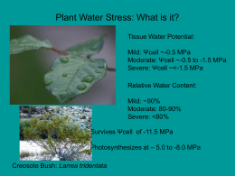 Plant Water Stress
