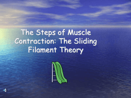 The Sliding Filament Theory - East Aurora Union Free School