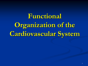 Functional Organization of the Cardiovascular System