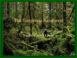 The Temperate Rainforest