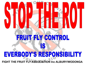- Fight Fruit Fly