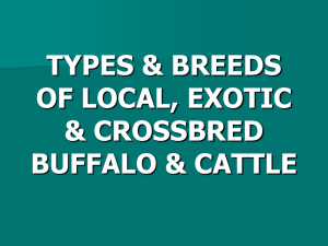 Five Dairy Breeds of Buffalos and Cattle in pakistan, Click here to open