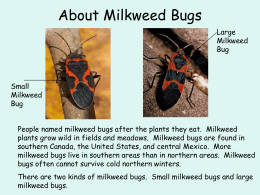 The Life Cycle of the Milkweed Bug