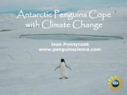 Adelie Penguins Cope with Global Climate Change.