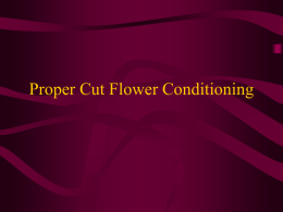 Cut Flower Conditioning