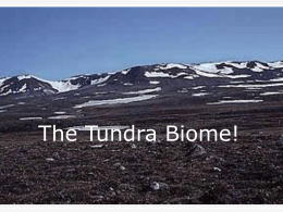 The Tundra Biome!