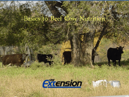 Basics to Small Farm beef cow nutrition