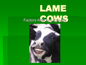 LAME COWS