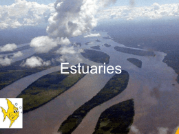 Estuaries - MUGAN`S BIOLOGY PAGE