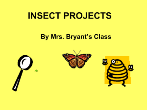 Insect PowerPoint by Mrs. Bryant`s Second Grade Class May 2012