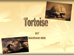 tortoise - Long Lawford Primary School