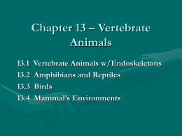 Chapter 13 – Vertebrate Animals