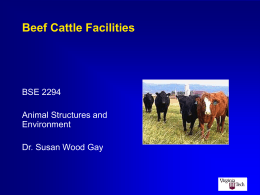 Beef Cattle Facilities