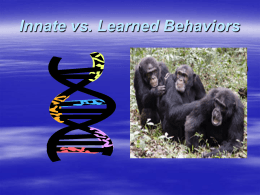 Innate/Learned Behavior Powerpoint