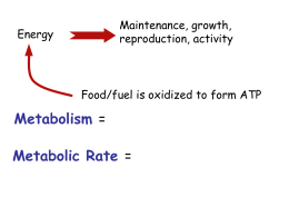 What factors affect an animal`s metabolic rate?